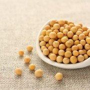 White hilum soybeans
