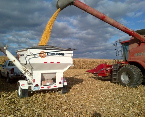 weighing off corn from customer's field