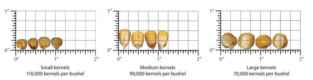Calculating Corn Yield Chart
