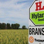 Branson wheat field photo