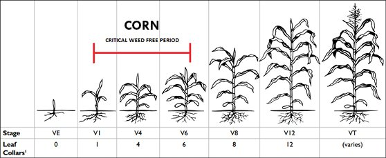 CriticalWeedFreeTiming_Corn
