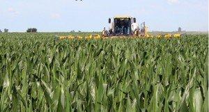 Custom Application in tall corn