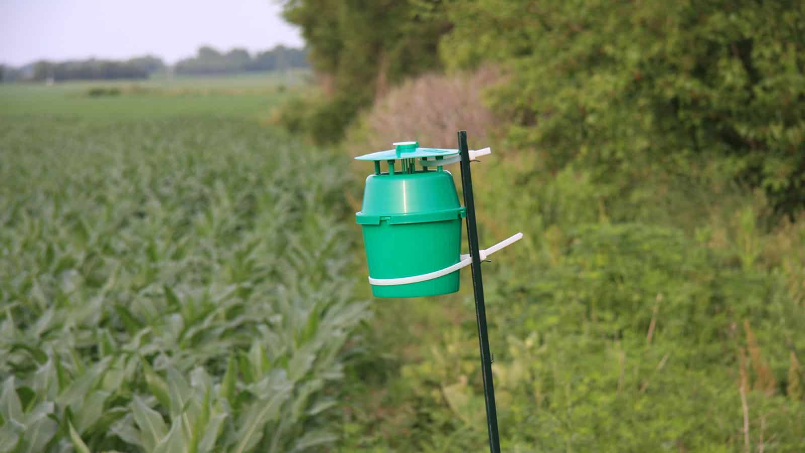 Thompsons Western Bean Cutworm trap