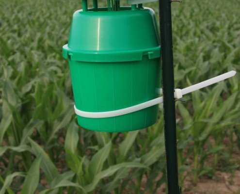 Western Bean Cutworm Trap