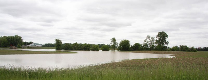 flood damage in corn and wet fields