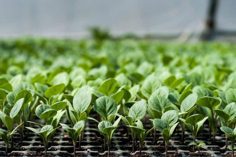 Greenhouse plants photo