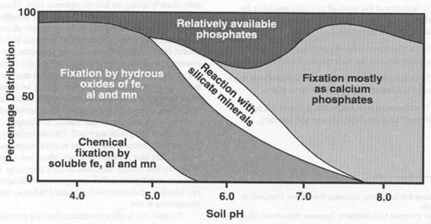 Phosphorus tie-up chart 2
