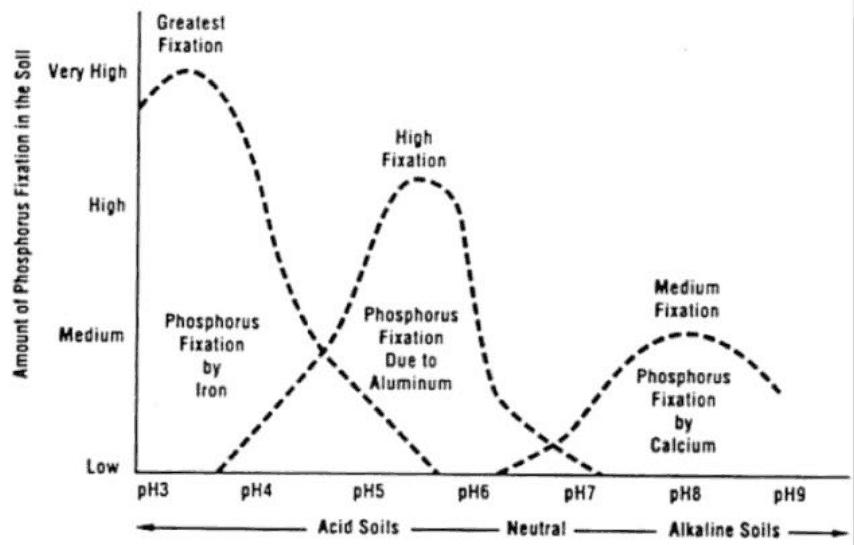 Phosphorus tieup chart