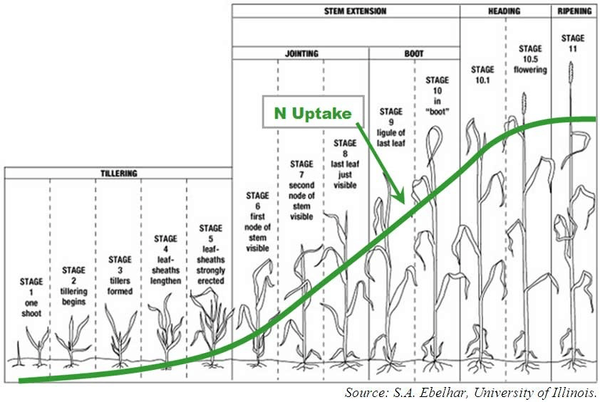 demand for nitrogen in corn
