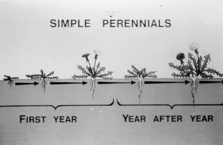 Simple Perennials