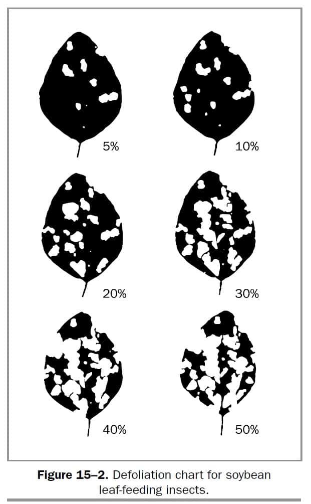 Defoliation chart for soybean leaf-feeding insects
